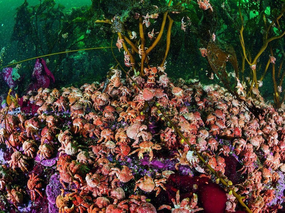 Galerie: Das Meer am Ende der Welt