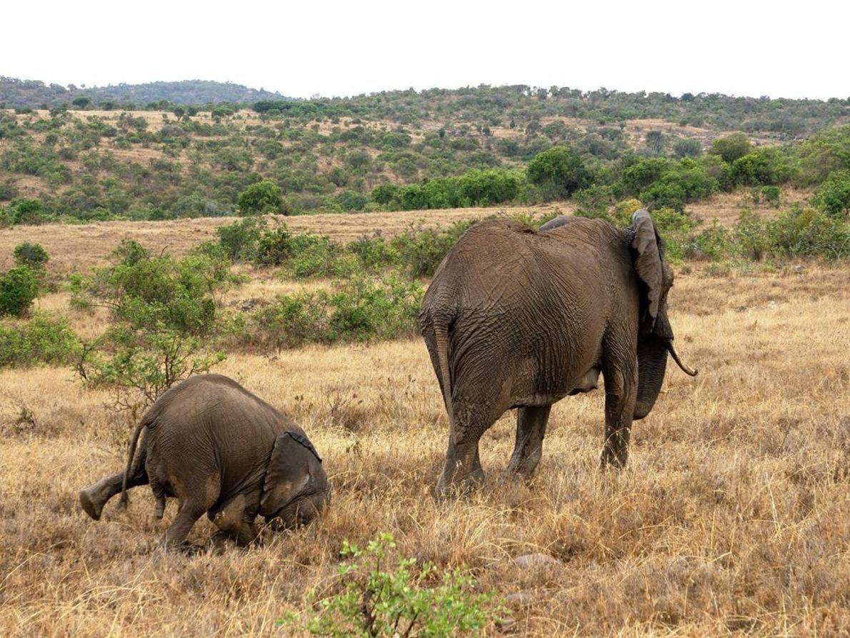 """Faceplant"" | Elefanten | Namibia"