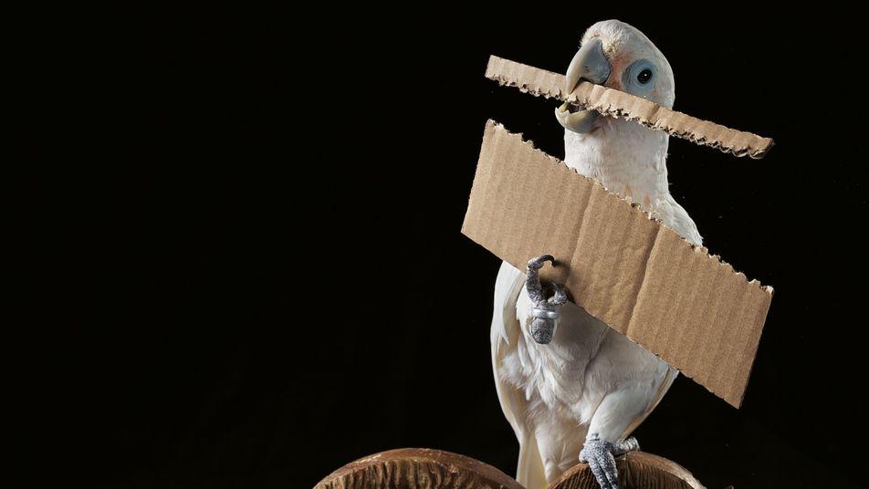 Von wegen Spatzenhirn! Wie schlau Vögel wirklich sind