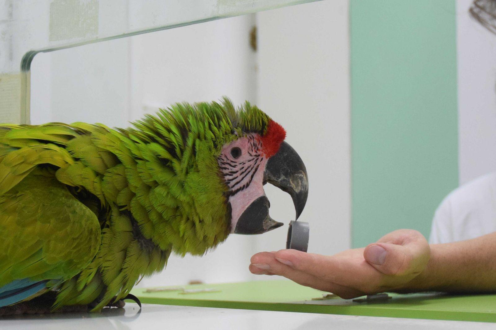 Kognitionstest mit Papagei