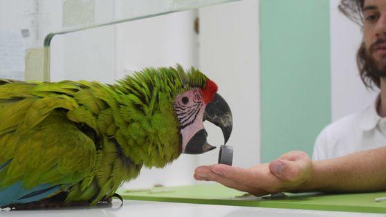 """""""Vögel haben eine starke Persönlichkeit"""""""
