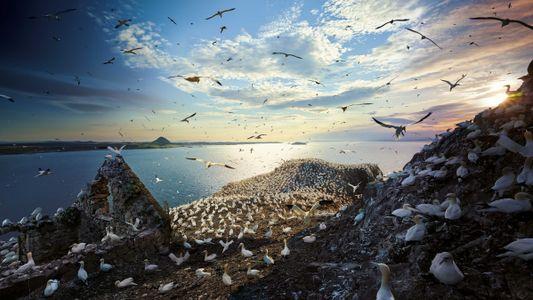 Der sechste Sinn der Zugvögel
