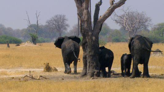 Elefant schlägt Löwen in die Flucht