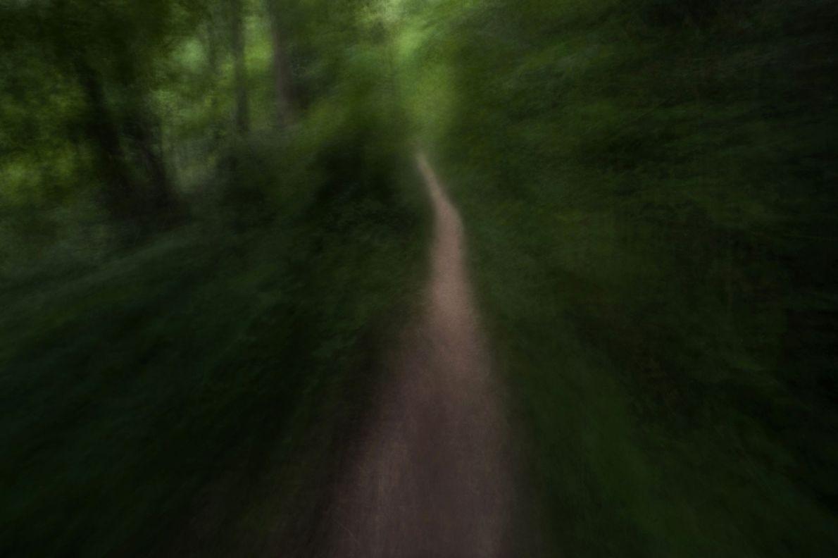 Ein kleiner Weg schlängelt sich durch das Grundstück von Wild Roots