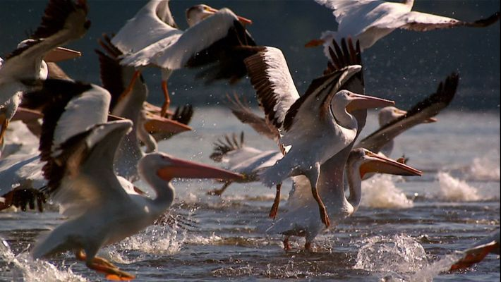 Faszination Zugvögel