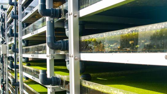 Im Symbiofilter wachsen Algen und Wasserlinsen gemeinsam.