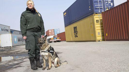 Hamburger Hafen: Im Kampf gegen Drogen- und Waffenschmuggel