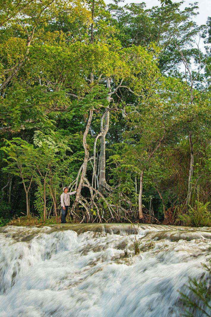 Als Teil eines Mangrovenwaldes, der eine Lagune umgibt, steht eine Mangrove inmitten von Wasserfällen.