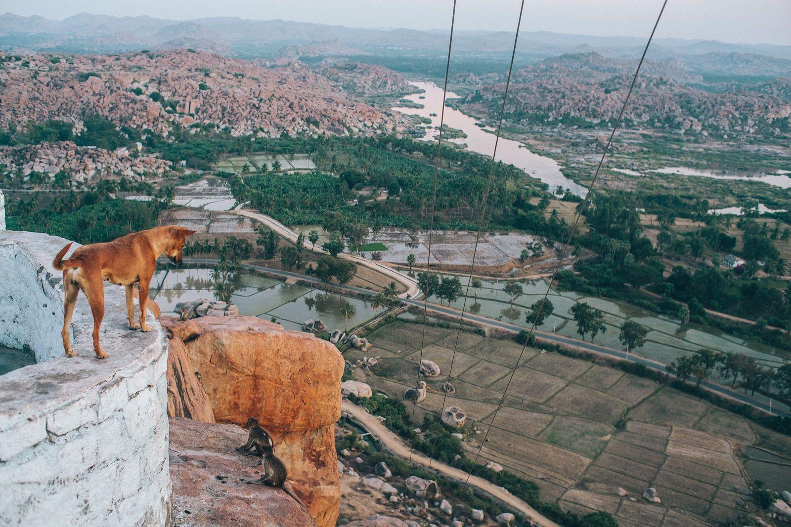 Galerie: Eine neue Generation adoptiert Indiens Straßenhunde