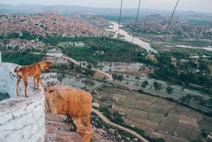 Ein Hund im Bundesstaat Karnataka blickt auf das alte Dorf Hampi hinab, das eine UNESCO-Welterbestätte ist.