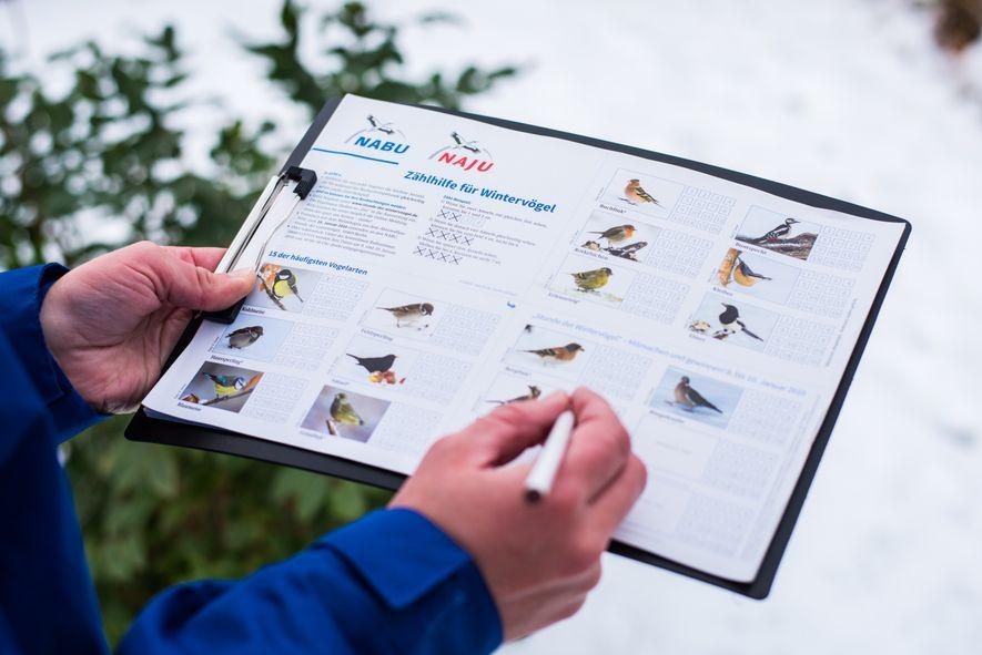 """Zur """"Stunde der Wintervögel"""" bietet der Nabu unter anderem eine Zählhilfe zum Ausdrucken an."""