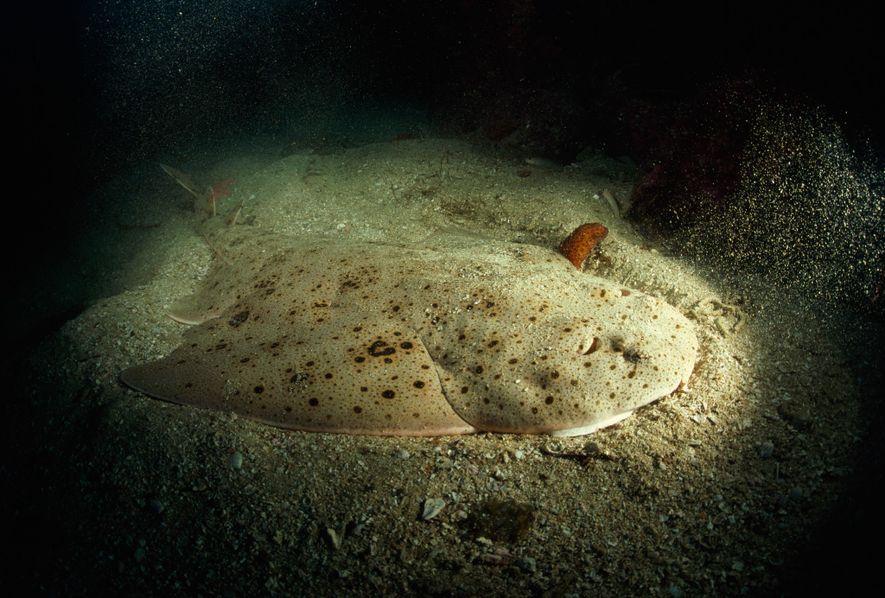 Räuber der Meere: Fantastische Bilder von Haien