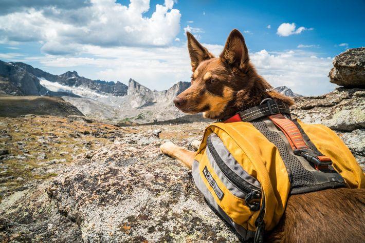 Hund auf Fels
