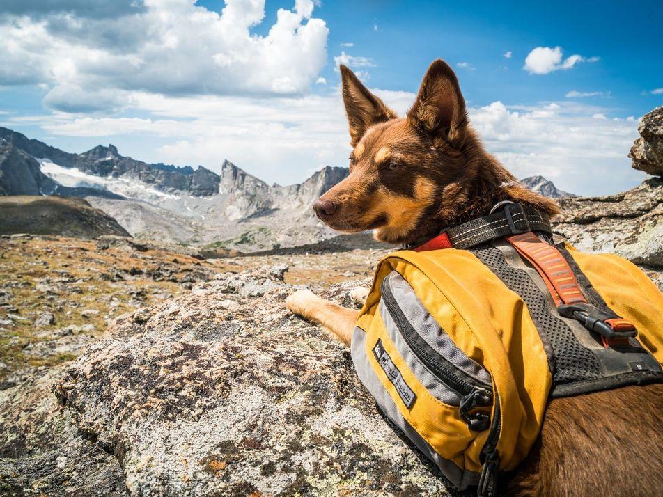 Wandern mit Hund: 31 Aufnahmen abenteuerlustiger Vierbeiner