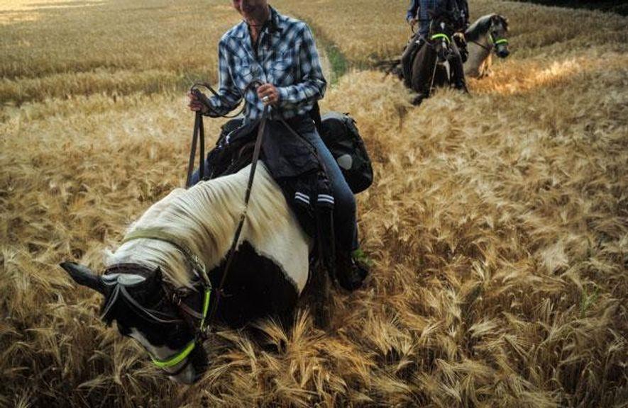 Nahe Dirnau hat ein Bauer den Feldweg umgepflügt – und Florian Wagner muss mit seinen fünf …