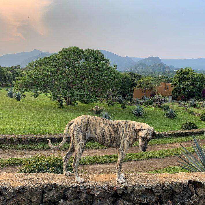 Tierrettung Mexiko Hund Head