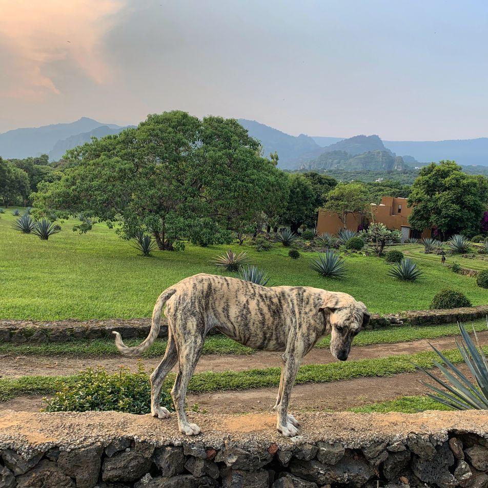 Retten und gerettet werden: ein mexikanisches Tierschutzprojekt
