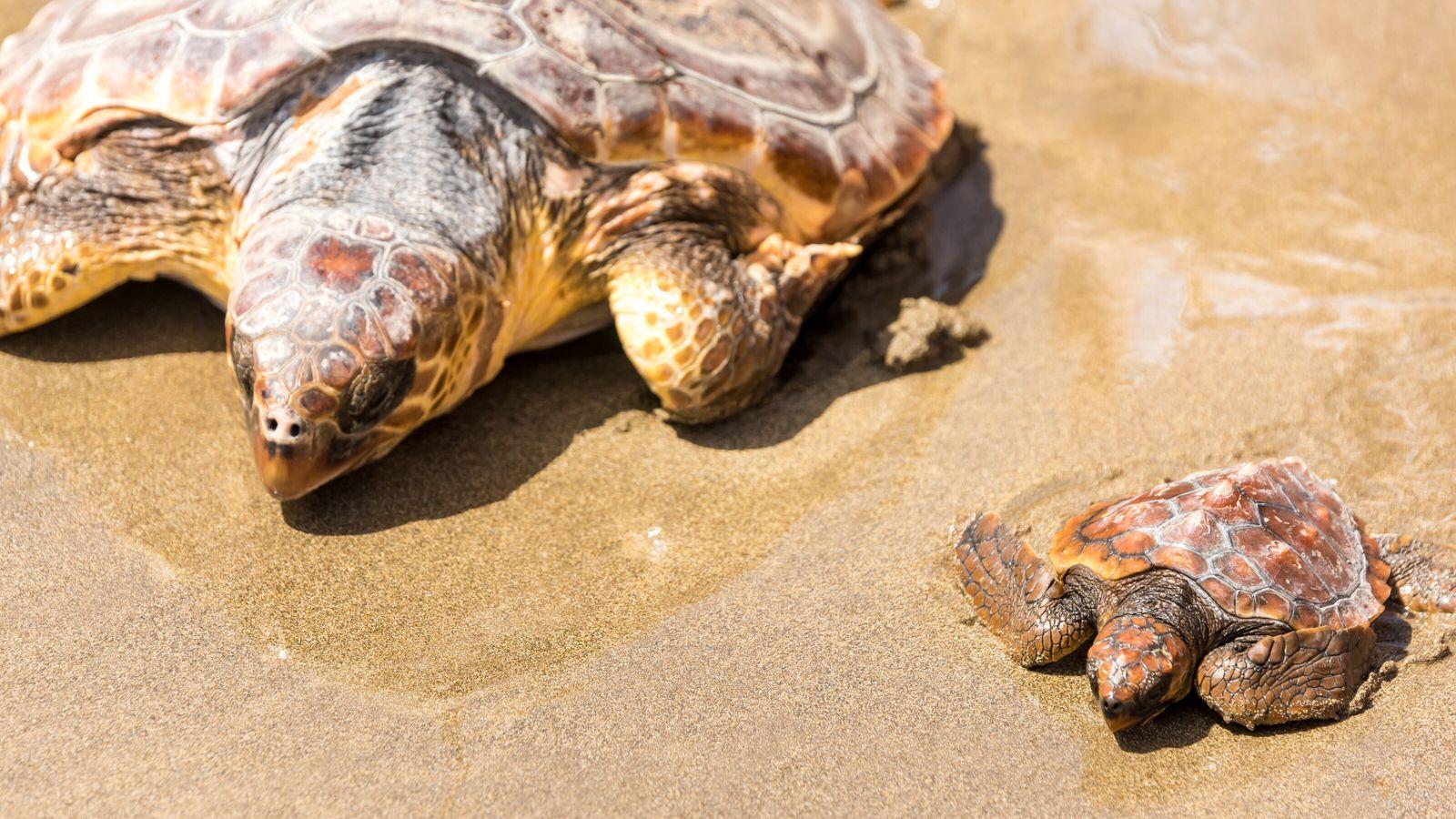 Der Strand von Çıralı ist weitgehend unberührt geblieben – dank der Bemühungen um den Schildkröten-Schutz