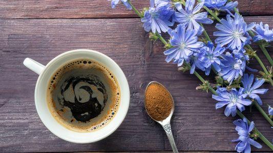Vom Kriegs-Kaffee zum Food-Trend: Das Comeback der Zichorie