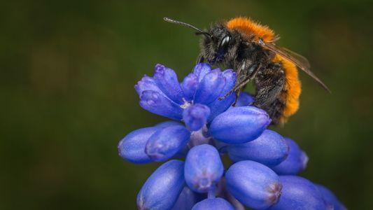Insektensterben: Exotische Snacks helfen Bienen