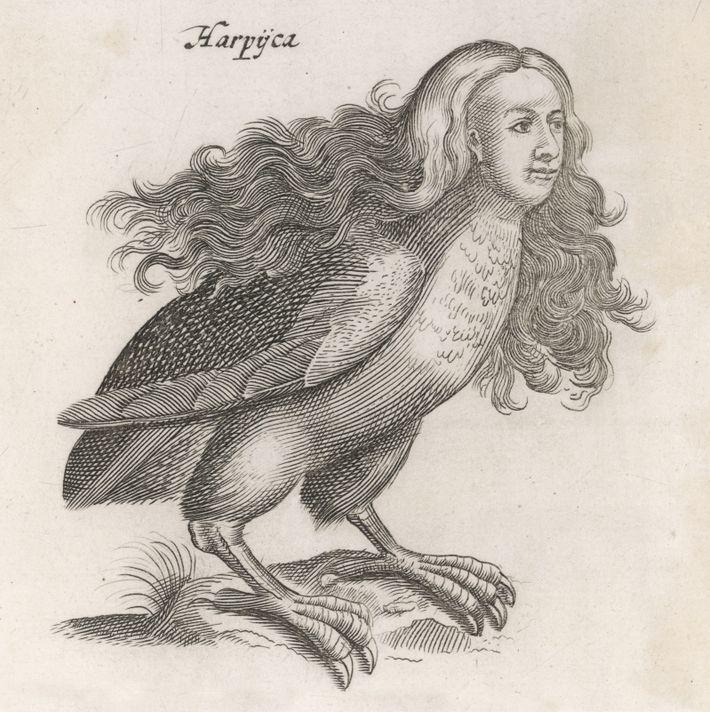 Harpyie Mythologie Kupferstich