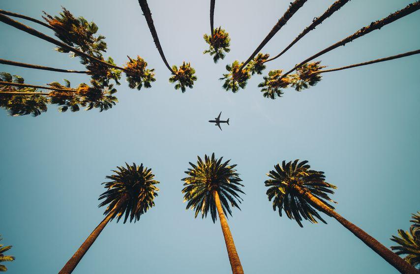 Palmen und Flugzeug von unten