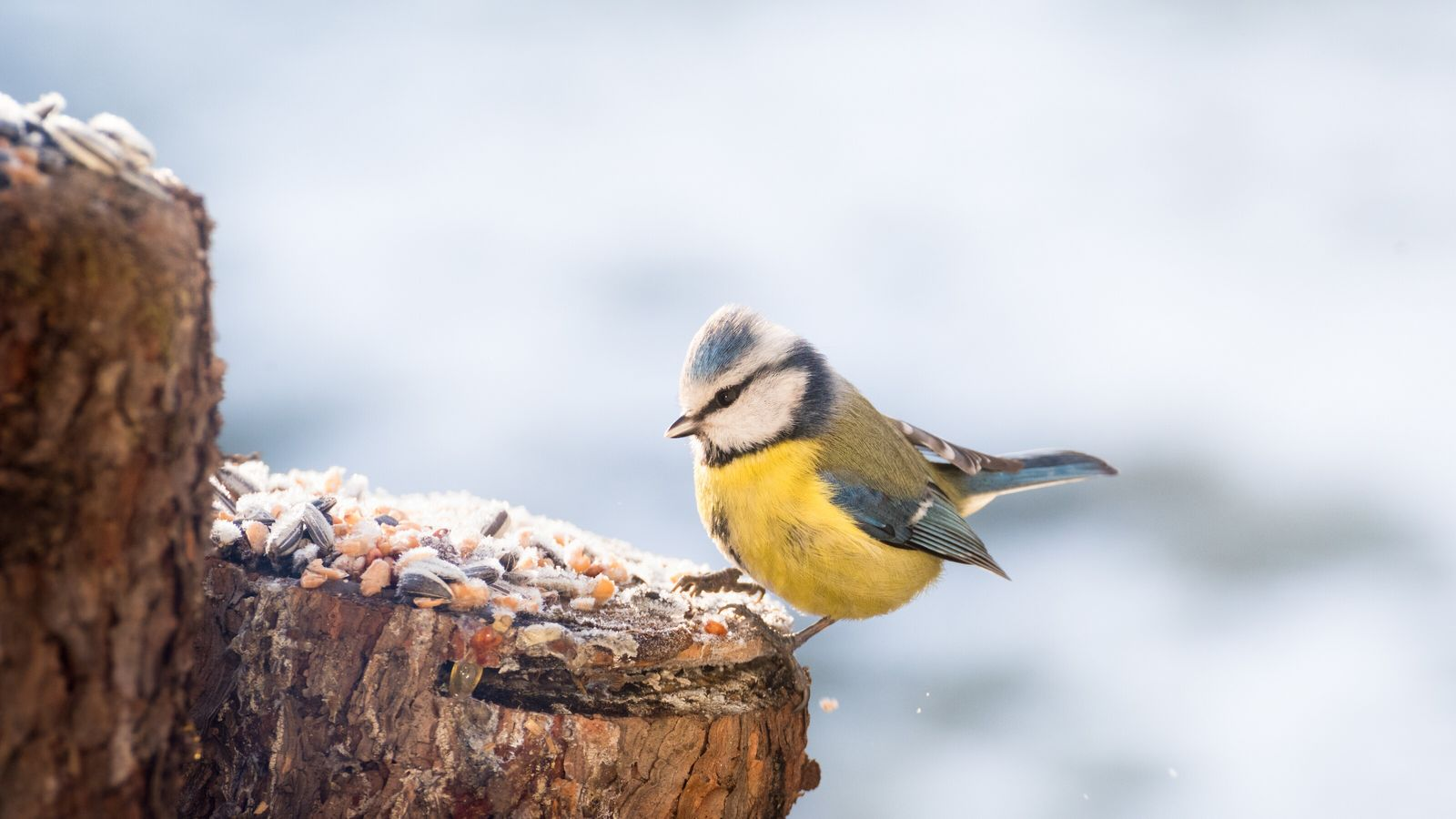 Vogelfutter Start-up