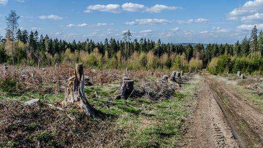 DNA-Tests gegen das Waldsterben in Deutschland