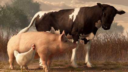 Die ersten Salmonellen: Zoonose vor 6.500 Jahren