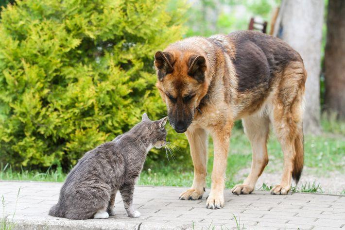 """""""Vielleicht werden wir in zwölf Monaten jeden Hund und jede Katze mit Atemwegsproblemen testen"""", sagt die ..."""