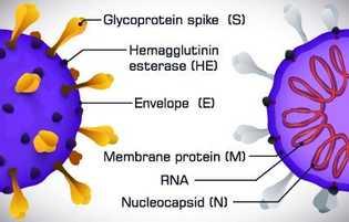 Corona Impfstoff Spike Protein