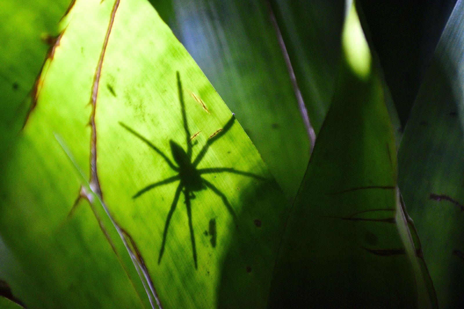 Spinnen, Schlangen, Höhenangst: Wie wir unsere Phobien überwinden