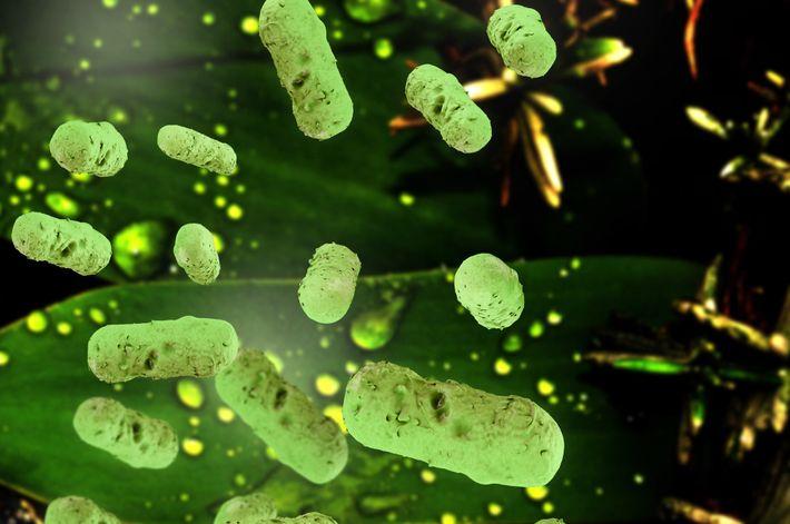 Stäbchenförmige Salmonellen