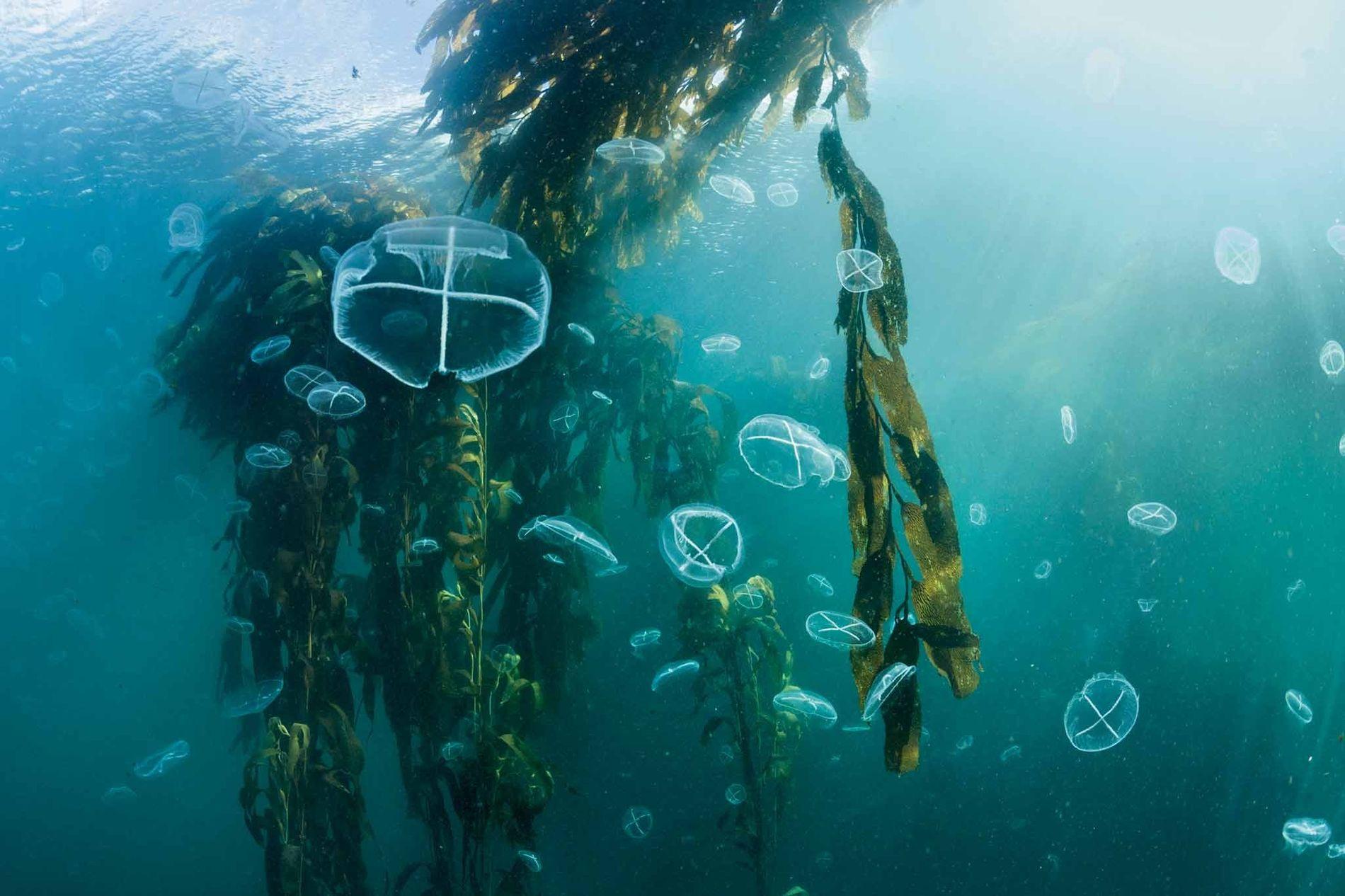 Unterwasserwälder