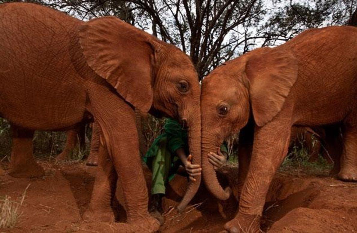 Ängstliches Elefantenwaise