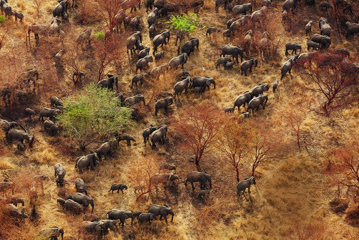 Nationalparks in Afrika