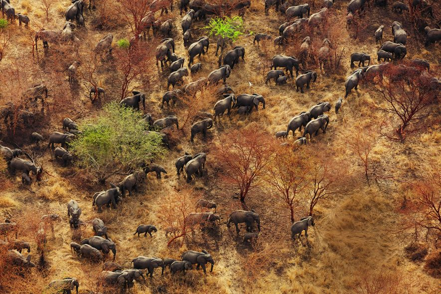 Zakouma-Nationalpark im Tschad: Die Savannenlandschaft im Südosten des Tschad ist von Akazienbäumen geprägt. Nach der Jahrtausendwende ...