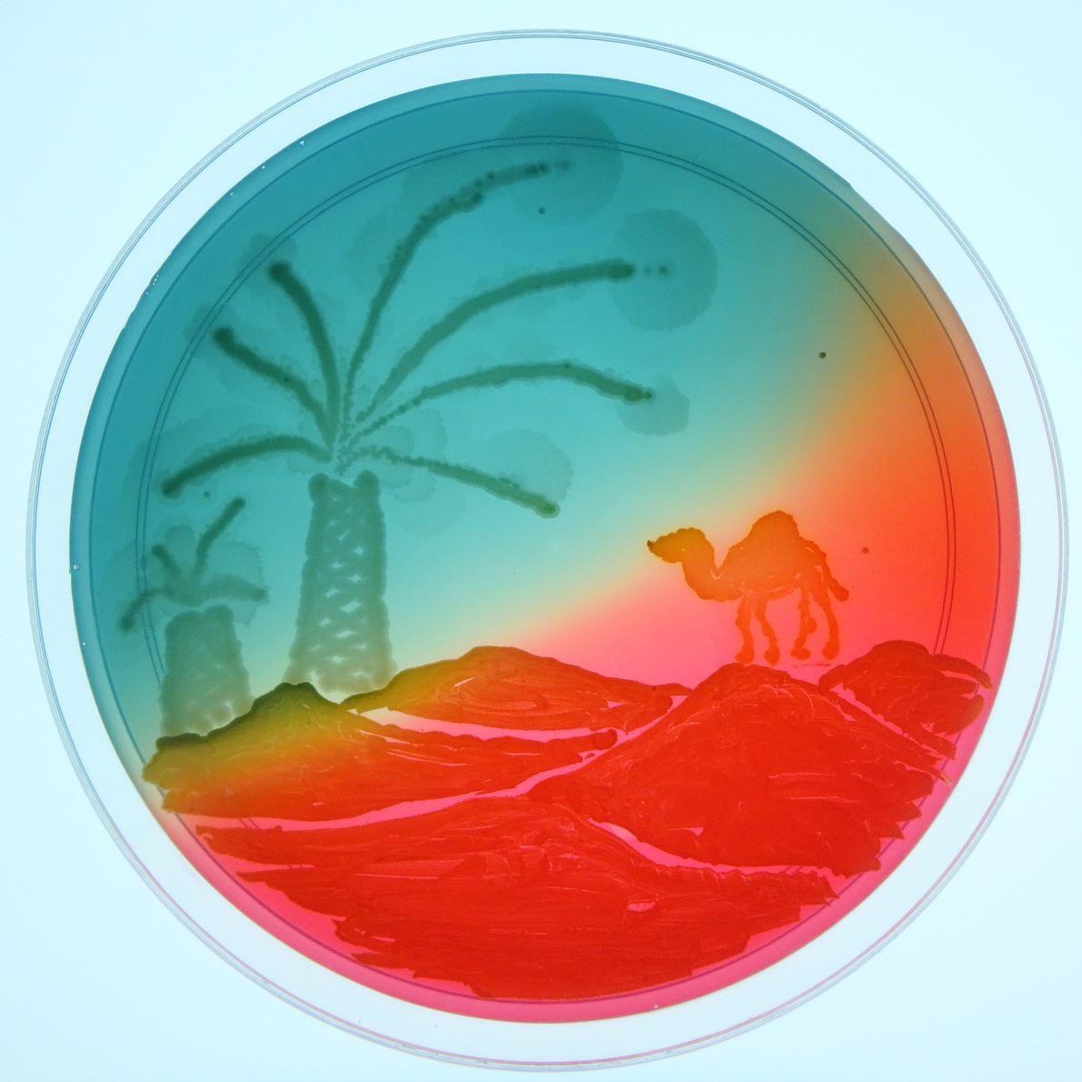 """Ein Agarkünstler malte dieses Wüstenbild mit Pathogenen, die in """"wasserarmen Regionen wie dem Nahen Osten"""" Harnwegsinfektionen ..."""