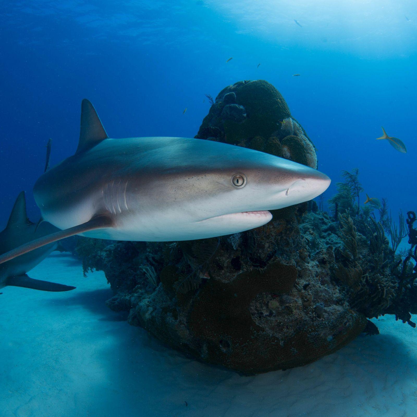 Bionik: Haihaut und Placoidschuppen