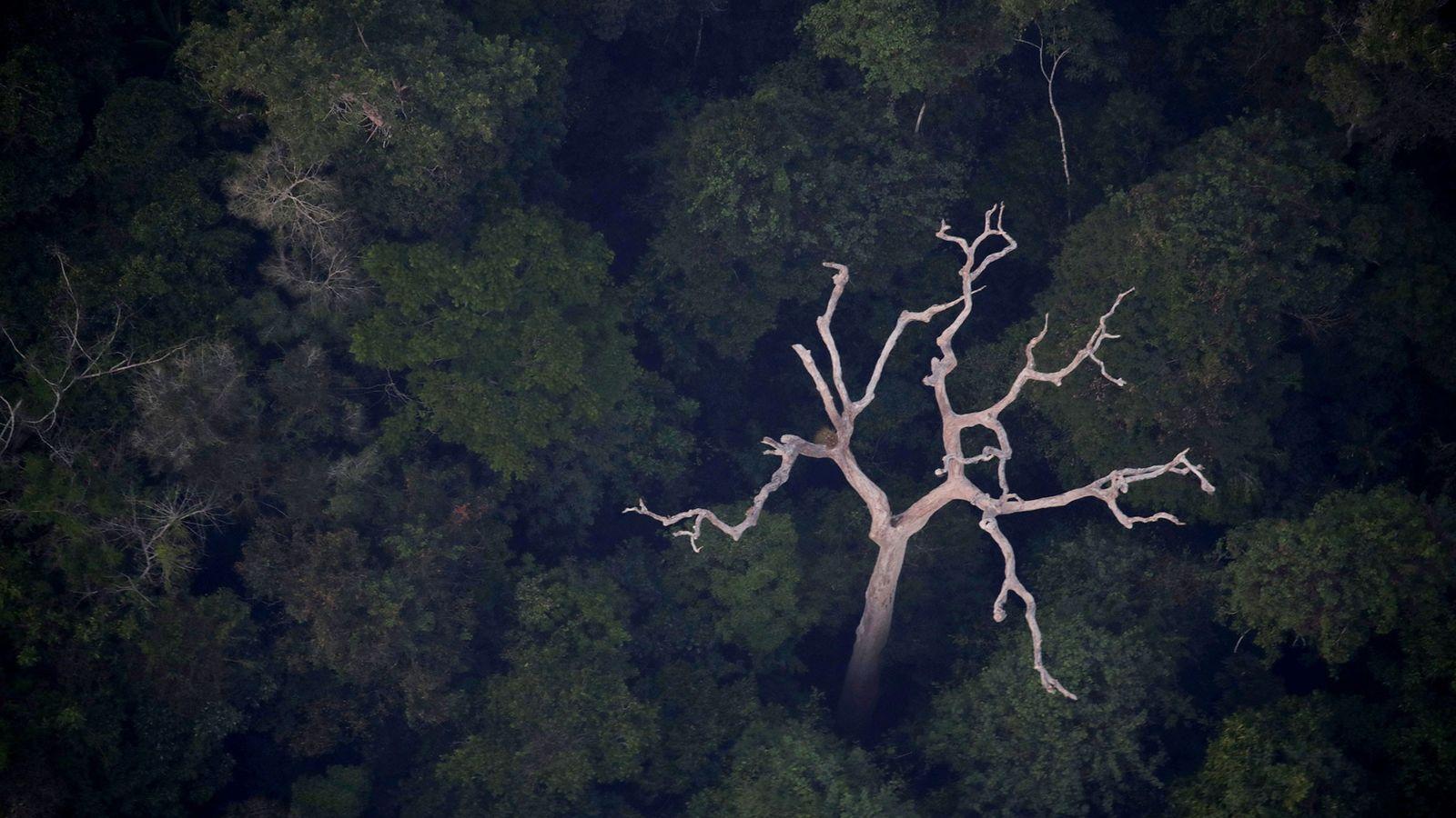 Eine Luftaufnahme des Amazonas in der Nähe von Porto Velho im brasilianischen Bundesstaat Rondonia vom 21. ...