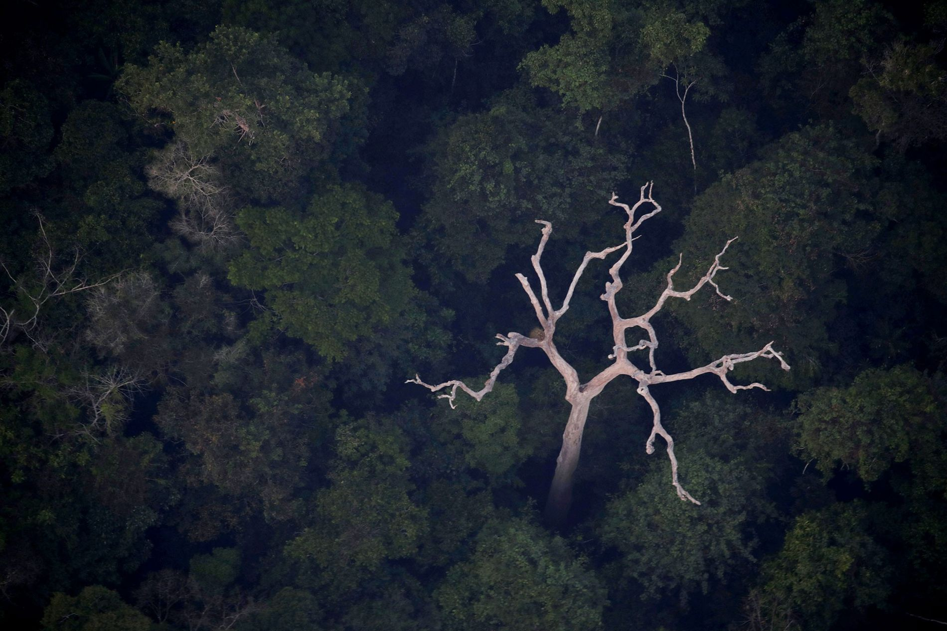 Eine Luftaufnahme des Amazonas in der Nähe von Porto Velho im brasilianischen Bundesstaat Rondonia vom 21. August 2019.