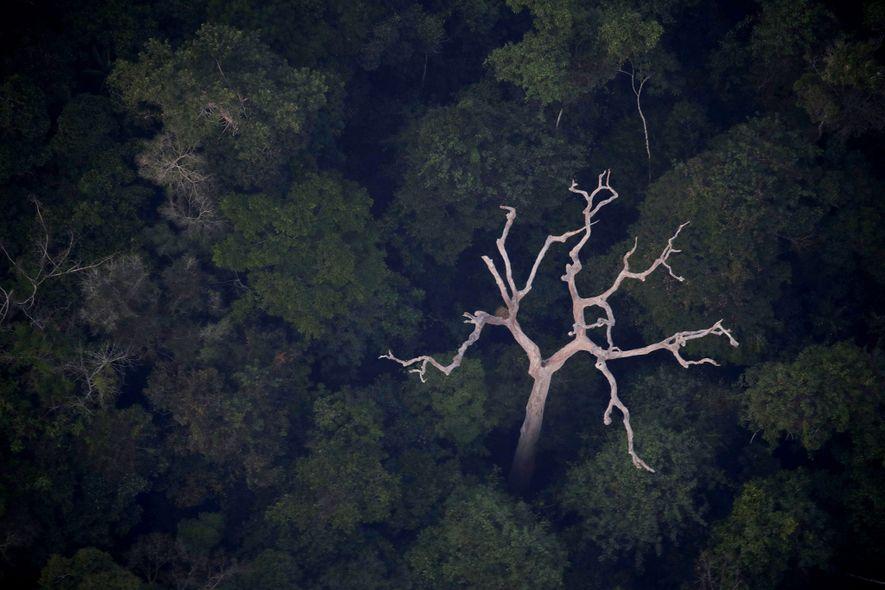 Erklärt: Der Amazonas produziert nicht 20 % unseres Sauerstoffs