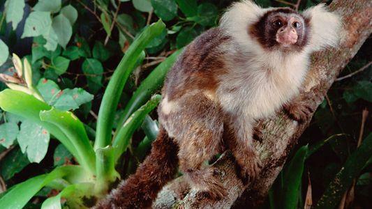 Was die Brände im Amazonas für die Tierwelt bedeuten