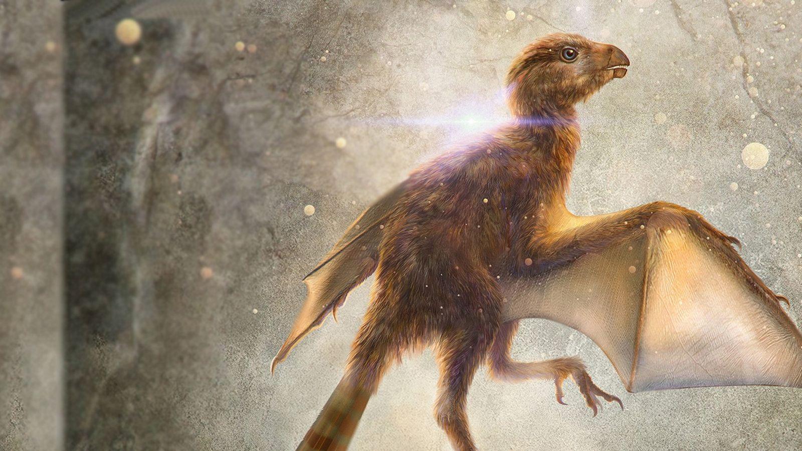 Diese Illustration zeigt Ambopteryx longibrachium. Die neu entdeckte Dinosaurierart war vermutlich nicht flugfähig, verfügte aber über ...