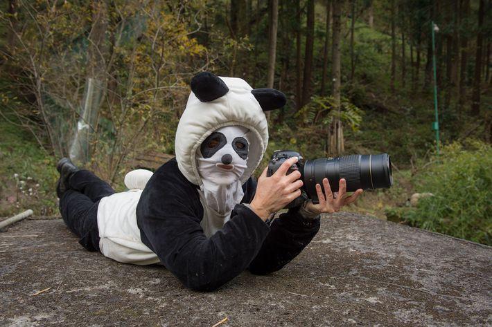 Ami Vitale in ungewöhnlicher Aufmachung beim Fotografieren von Riesenpandas im Hetaoping Wolong Panda Center. Pandas, die ...