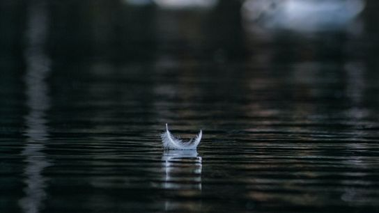 Eine Feder auf einem dunklen See