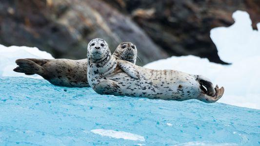 Vom Mistkäfer bis zum Seehund: Diese Tiere navigieren mithilfe der Sterne