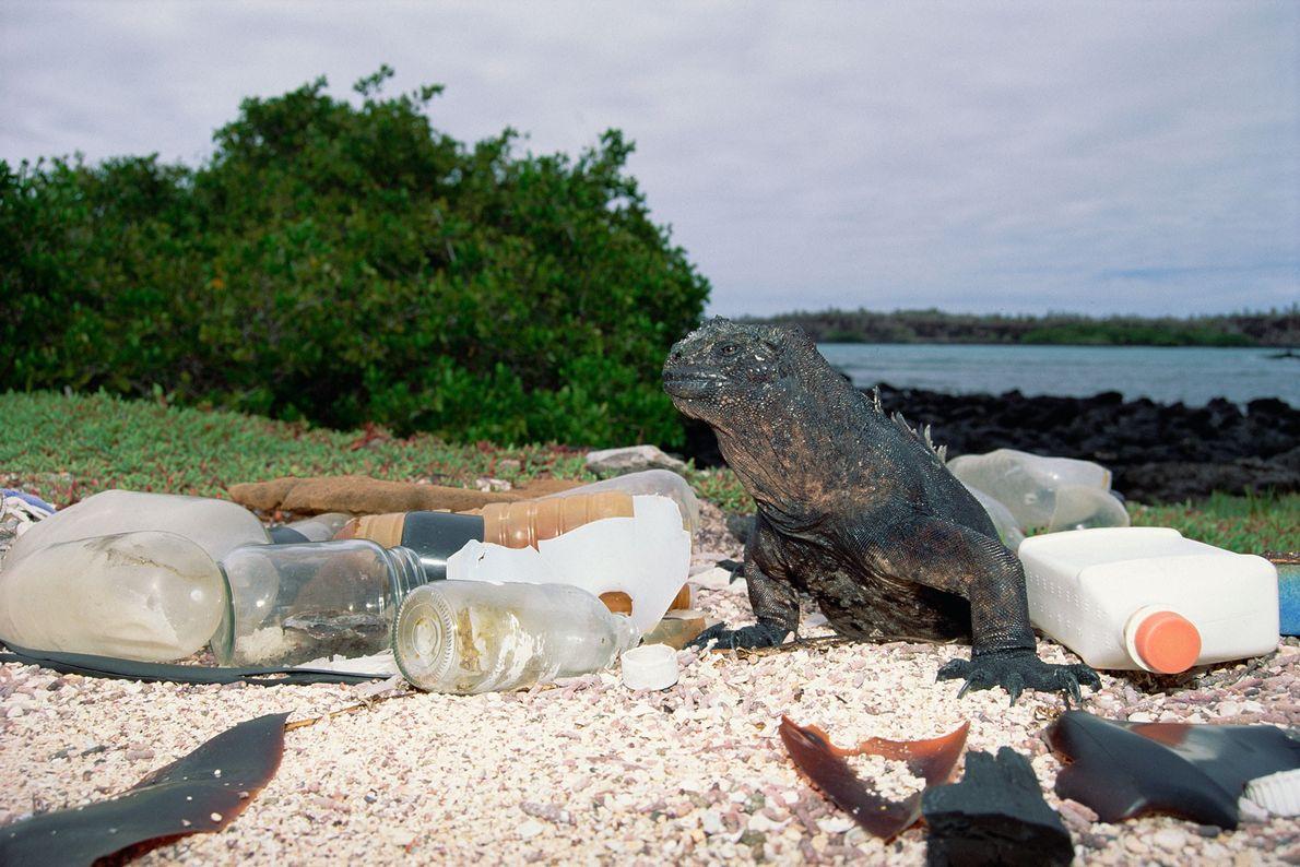 Leere Plastik- und Glasbehälter, die an der Insel Santa Cruz in Ecuador an Land gespült wurden. ...