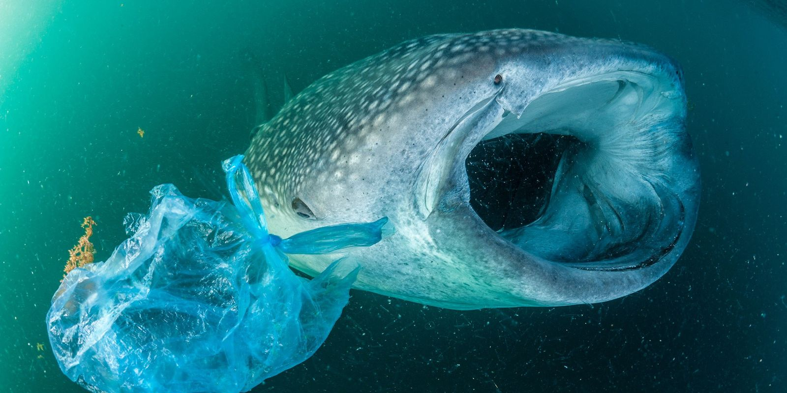 Fotos von Tieren in einem Meer voller Plastik
