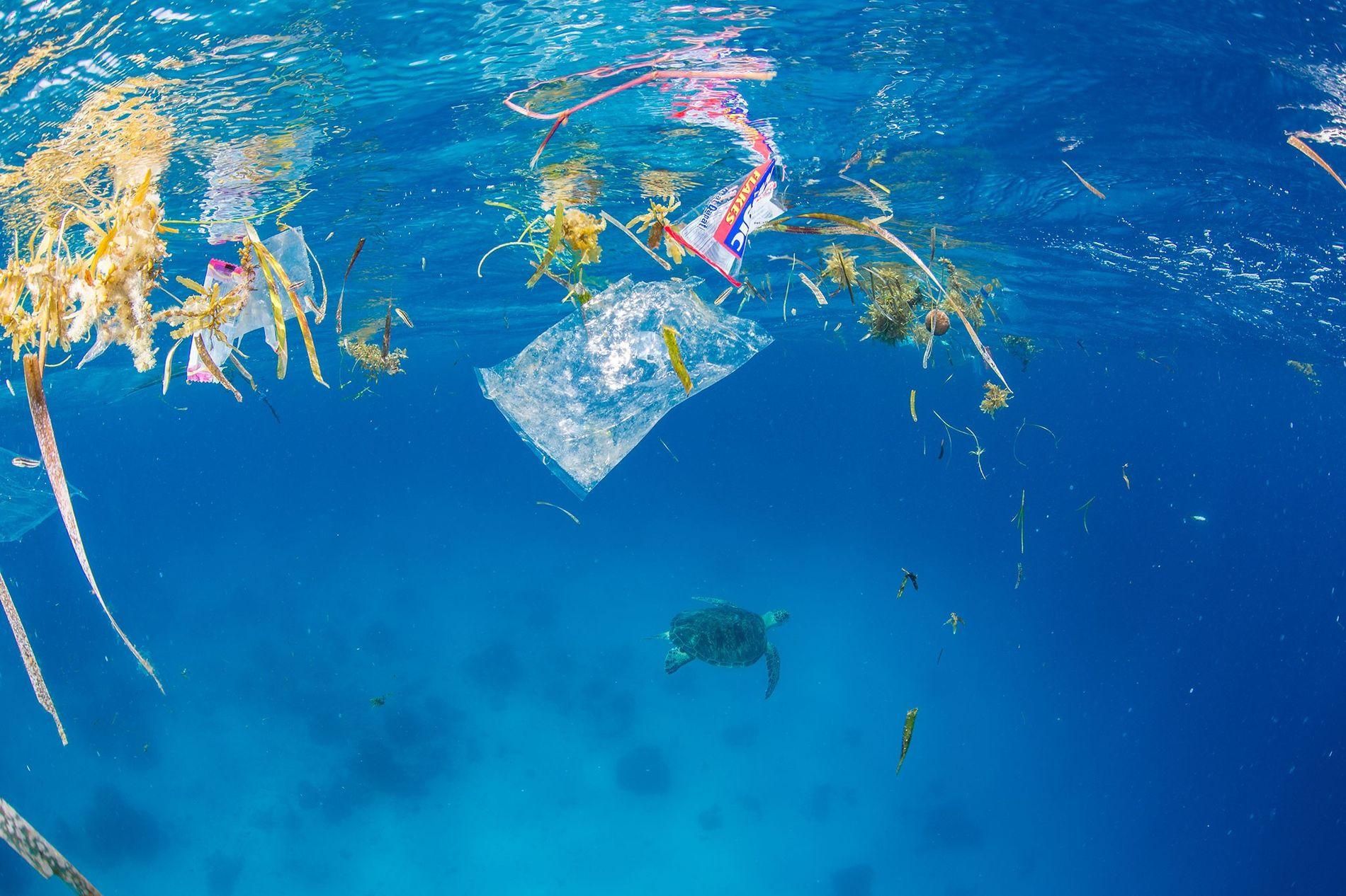Plastikmüll bedroht weltweit immer mehr Ökosysteme.